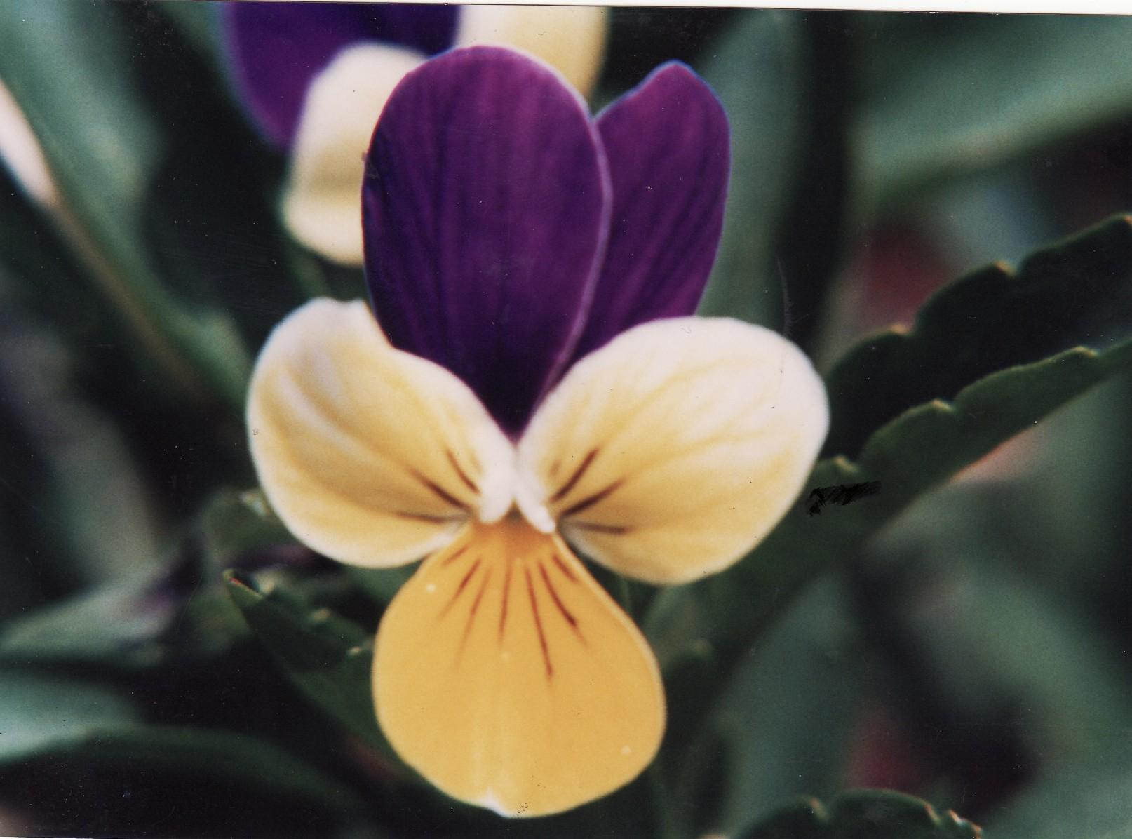 spiritual flower essence