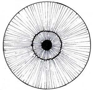 Iridology - fibre structure - Aziz Shamanism