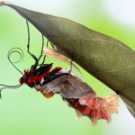 Example of a healing crisis: Butterfly emerging from cocoon