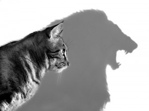 Delusions of grandeur - cat with lion shadow
